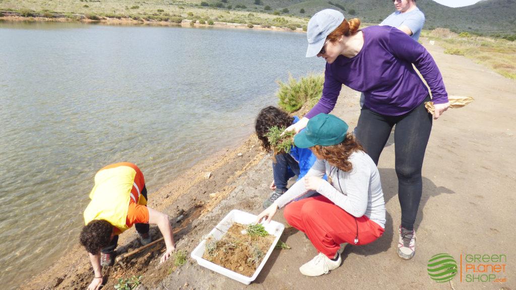 Voluntarios replantando especies de dunas