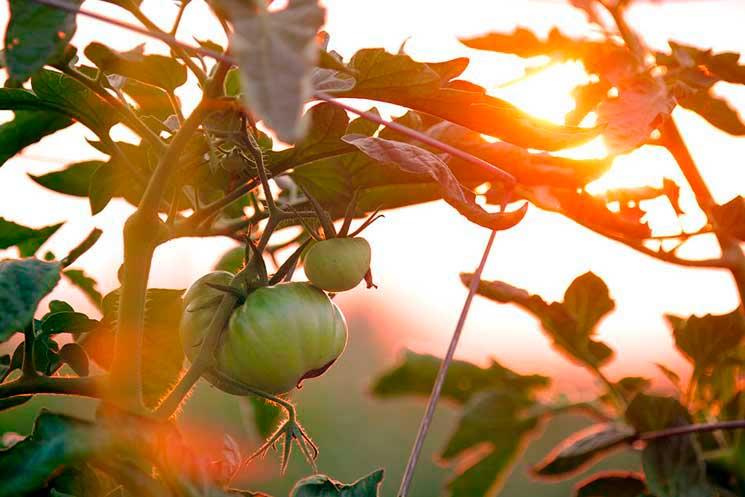 cultivo-bio-greenplanetshop-2